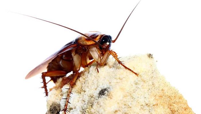 Обработка ресторанов от тараканов