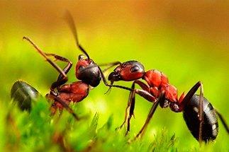 Радикальные способы уничтожения муравьев