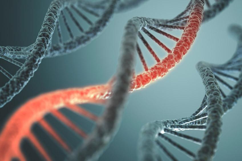 Здоровье и генетика