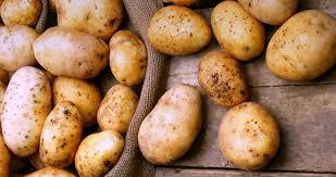 Болезни и повреждения картофеля