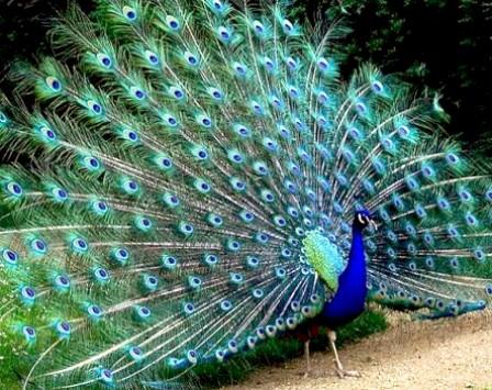 Продолжаем разговор о птице