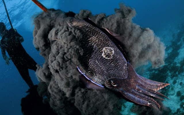 Темная сторона кальмара