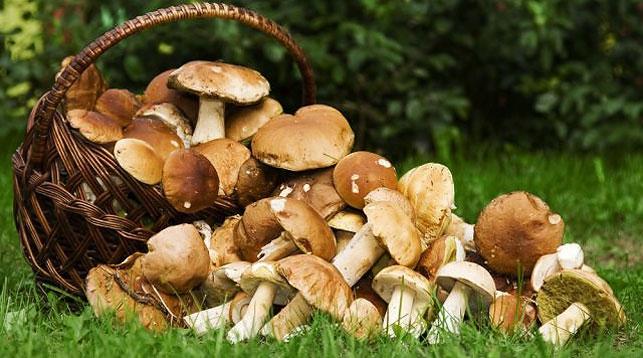 Товароведение свежих и переработанных грибов