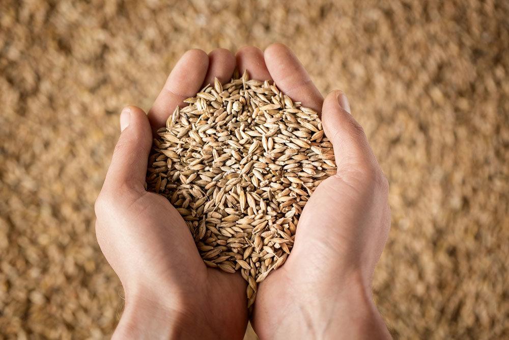Из истории зерна