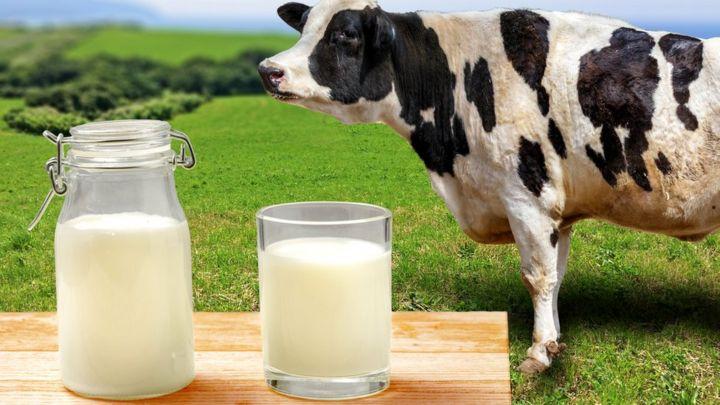Молоко добывается сложнее нефти
