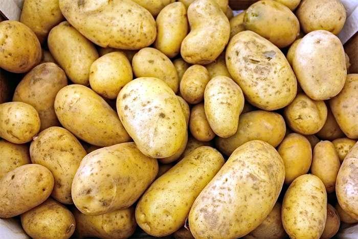 Белорусы накормят россиян картошкой